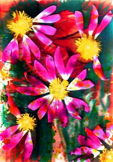 Flower And  Abstract  And   Summer  And     Square Royalty Free Stock Images