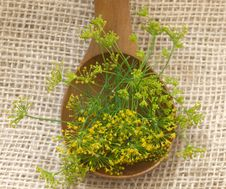 Free Fennel Flower Stock Images - 19979724