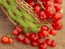 Free Red Currants Stock Images - 19979804