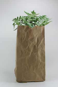 Free Brown Crumpled Paper Bag Royalty Free Stock Image - 19980086