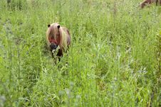 Small Horse Royalty Free Stock Photography