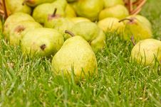 Free Pears In The Basket Stock Image - 19981331