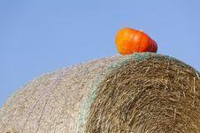 Free Orange Cucurbit Royalty Free Stock Images - 19981419