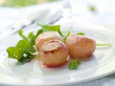 Free Potato Royalty Free Stock Photo - 19981855
