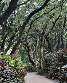 Free Path In Garden Covered With Trees Stock Photography - 19983502