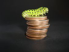Free Caterpillar Stock Images - 19984384
