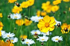 Free Beautiful Yellow Flower On A Meadow In A Sunny Day Stock Photos - 19985313