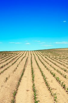Free Field Over Blue Sky Stock Photography - 19985732