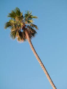 Free Palm Tree Royalty Free Stock Photography - 19985737