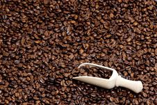 Free Coffee Beans Royalty Free Stock Photography - 19989737