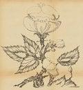Free Wild Rose Flower Royalty Free Stock Photos - 19993318