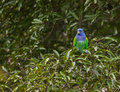 Free A Blue-headed Parrot Under The Rain Stock Photos - 19996583