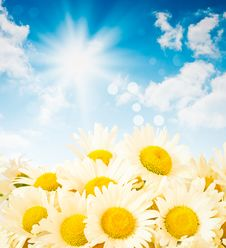 Free Daisies Against The Sky Royalty Free Stock Images - 19991309
