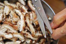 Free Preparing Mushrooms For Cooking Stock Photo - 19991710