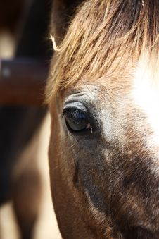 Free Horse`s Eye Stock Photo - 19995480
