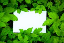 Free Blank White Card Surrounded By Leaves Royalty Free Stock Photos - 19995848