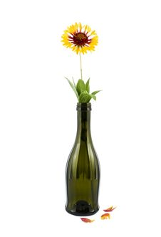 Free A Flower The Yellow Royalty Free Stock Images - 19996139