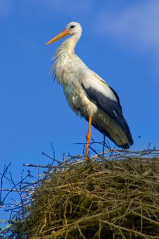Free Stork In The Nest Stock Images - 19996234