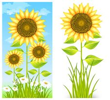 Free Sunflowers On Blue Stock Photo - 19996280