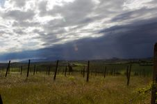 Free Dark Clouds Over Vineyard Royalty Free Stock Photography - 19996397