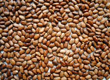 Free Dried Beans Stock Photo - 19997480