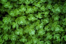 Free Green Flower Leaf Royalty Free Stock Photos - 19998348