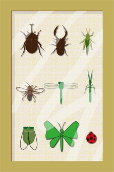Free Insect Specimens Frame Stock Image - 19998981