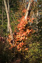 Free Splash Of Fall Color Stock Photography - 26562