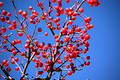 Free Multiple Red Berries Royalty Free Stock Photography - 27737