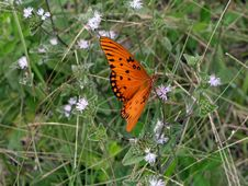 Free Butterfly In The Meadow Royalty Free Stock Photography - 21297
