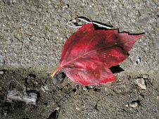 Free Red Leaf On The Sidewalk Royalty Free Stock Photos - 21728