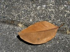 Free Brown Leaf On The Sidewalk Stock Image - 21731
