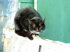 Free Cat Royalty Free Stock Photos - 22188