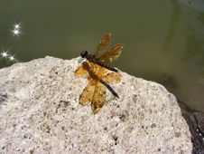 Free Dragon Fly Royalty Free Stock Image - 24766