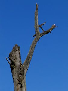 Free Dead Tree Stock Photography - 26532