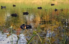 Free Autumnal Pond. Stock Images - 200354
