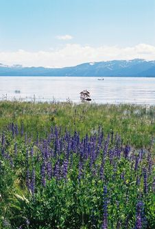 Free Lake Tahoe Nevada With Mountains And Flowers Royalty Free Stock Photos - 201458