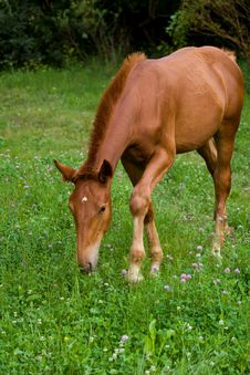 Free Foal Feeding Royalty Free Stock Photo - 203155
