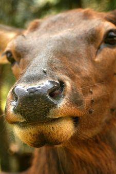 Free Deer Nose Stock Photos - 203733