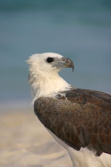 Free Eagle By The Sea Royalty Free Stock Photos - 204858