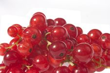 Free Redcurrants Stock Photography - 205322