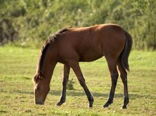 Free Foal Stock Photos - 205933