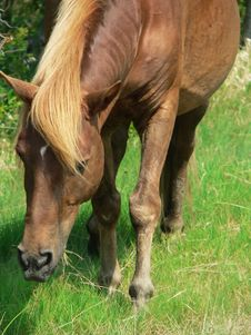 Free Wild Pony Stock Photography - 206582