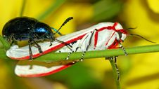 Free Attack Of The Bugs Stock Photo - 207110