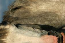 Free Horse (Closeup) Royalty Free Stock Photo - 207185