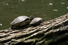 Free Turtles Stock Photography - 207312