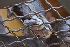 Free Ape S Hand Stock Photos - 208493