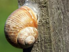 Free Snail Stock Photography - 209762