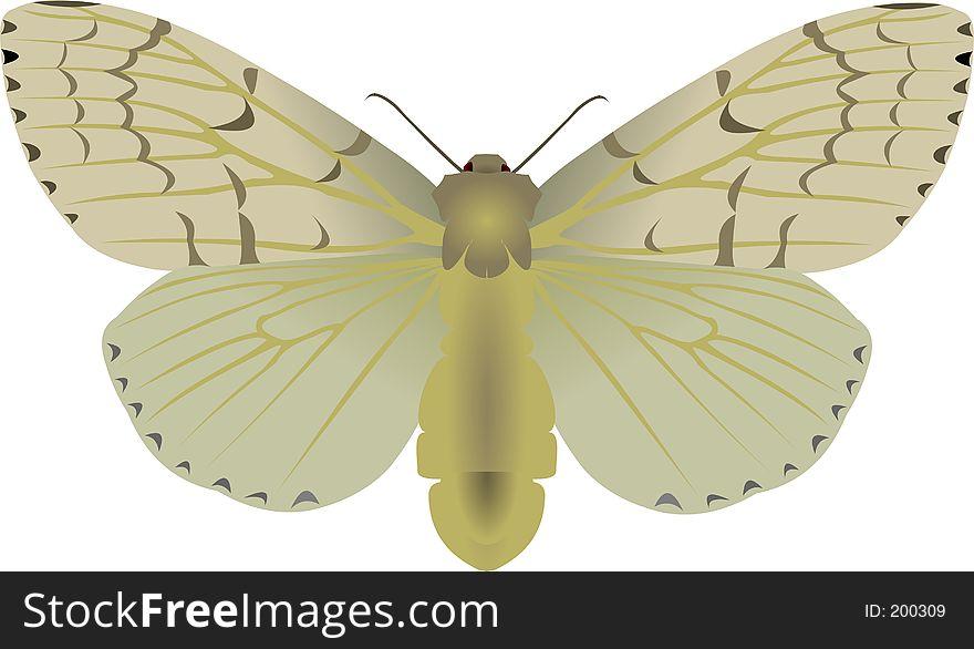 Gipsy moth