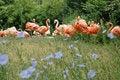 Free Flock Of Pink Flamingo Stock Photos - 2002003